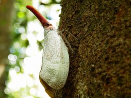 Insect at Kutai NP