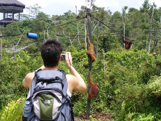 The orangutan island, Samboja Lodge